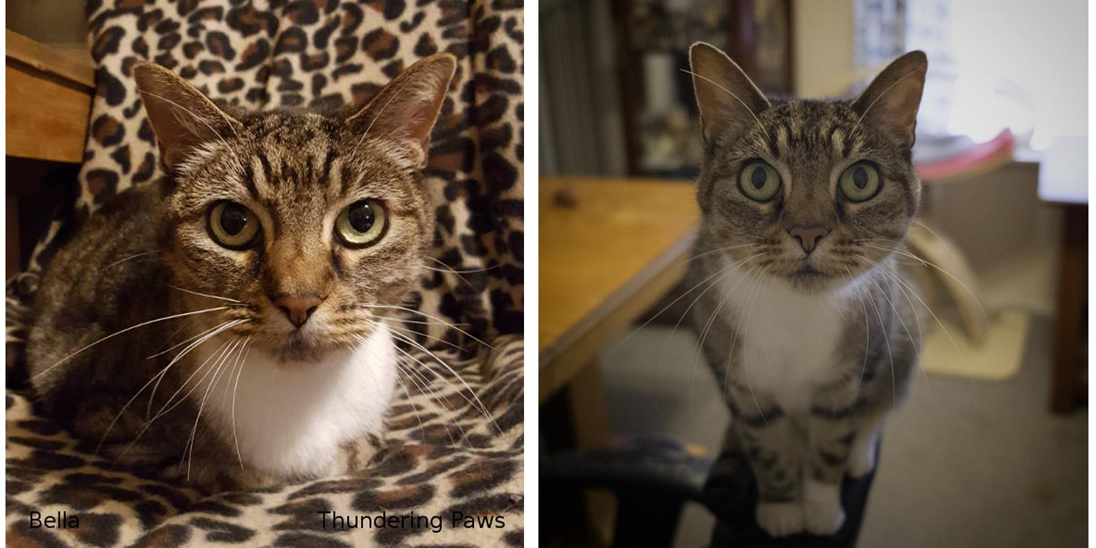 Bella, a Special Cat