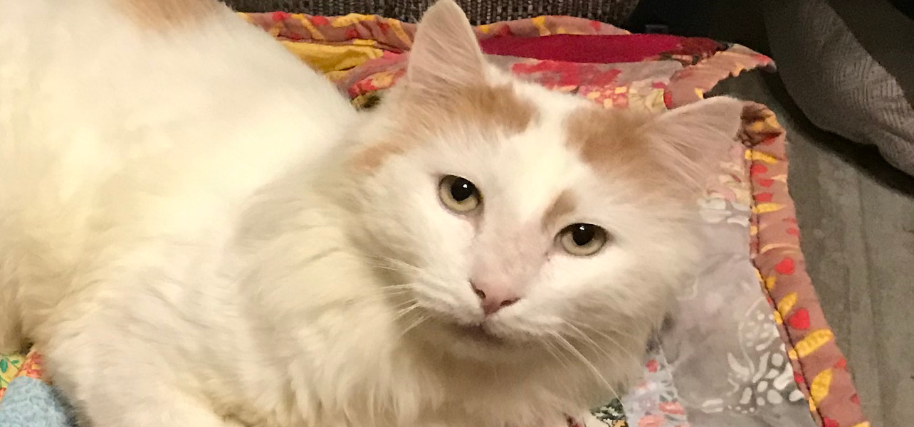 Help a special cat this Giving Tuesday