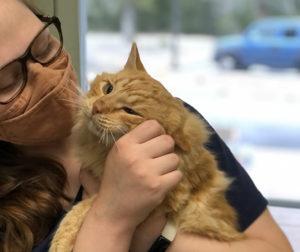 TNR cat getting pet.